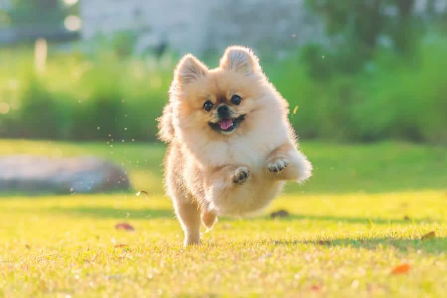 kleiner Hund im Park
